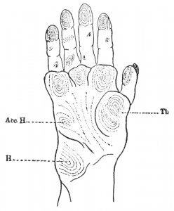 """All these signs are peculiar to what is called in neuropathology the monkey hand."""