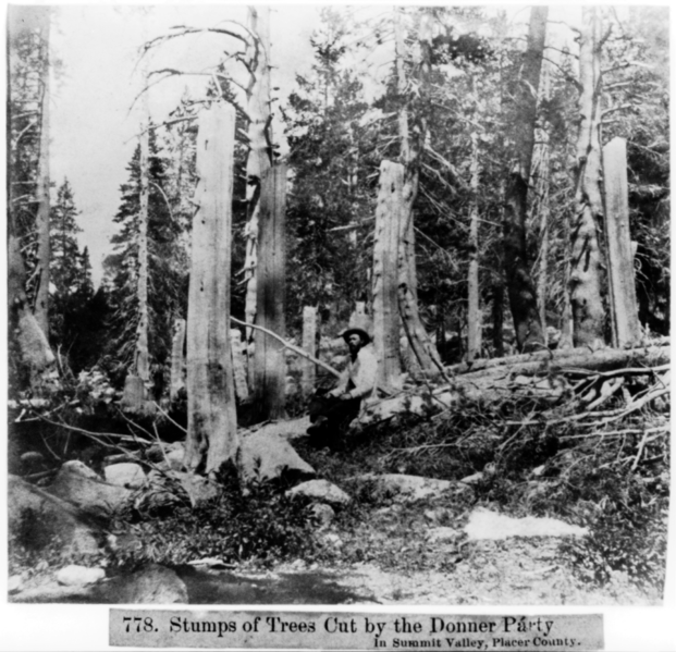 621px-Stumps_of_trees_cut_by_the_Donner_Party